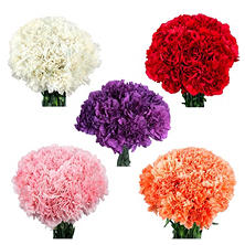 Carnations, Assorted (150 stems)