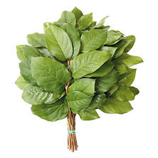Salal Evergreen Floral Bouquet Tips (Choose 25 or 50 bunches)