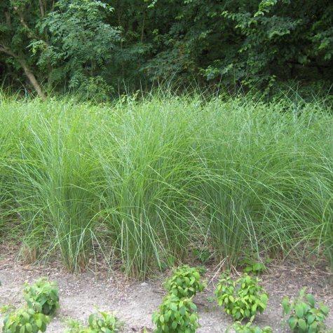(14.3-Qt) Ornamental Grass Pot - Southwestern Gardening