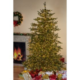 75 micro led pre lit natural cut monaco pine christmas tree