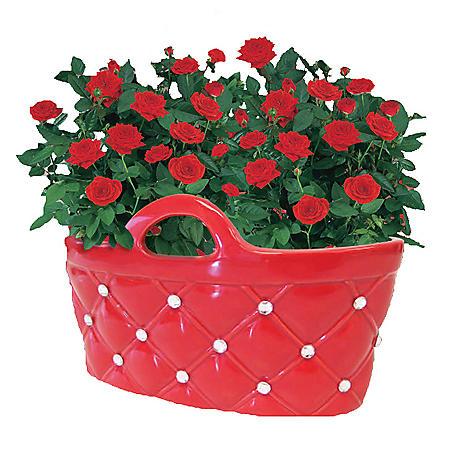 Mini Rose in Ceramic Purse