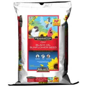 Pennington Select Black Oil Sunflower Seed Wild Bird Feed (44 lbs.)