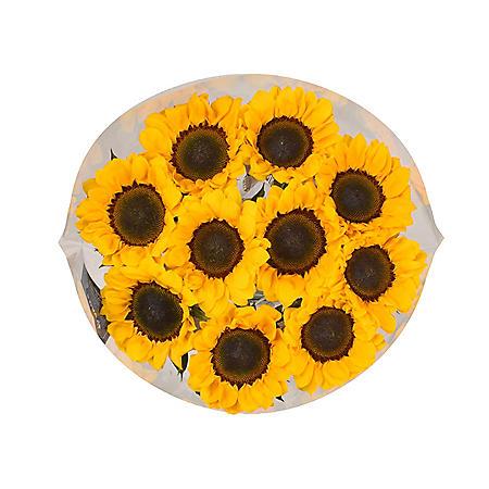 Sunflowers (10 stems)