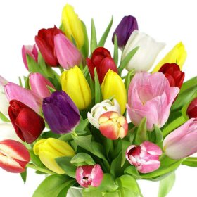 Tulips, Assorted Colors (100 stems)