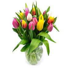 Tulip Bouquet, Rainbow Colors (20 Stems)