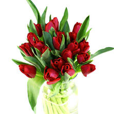 Tulips, Red (100 stems)