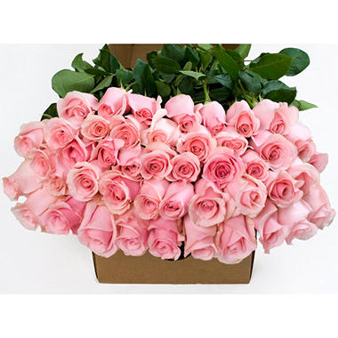 Roses - Pink - 50 Stems