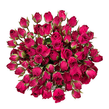 Spray Roses, Hot Pink (120 stems)