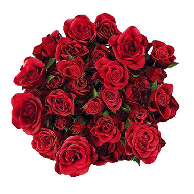 Spray Roses, Red (choose 60 or 120 stems)