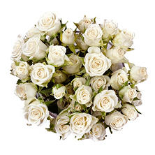 Spray Roses, White (choose 60 or 120 stems)