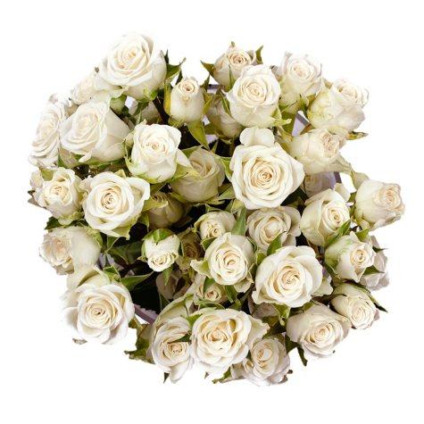 Spray Roses, White (100 stems)