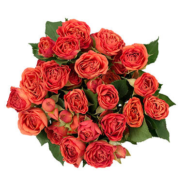 Spray Roses, Orange (120 stems)