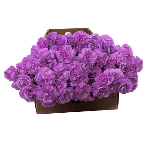 """Florigene"" Moonpearl Mini Carnations  (200 Stems)"