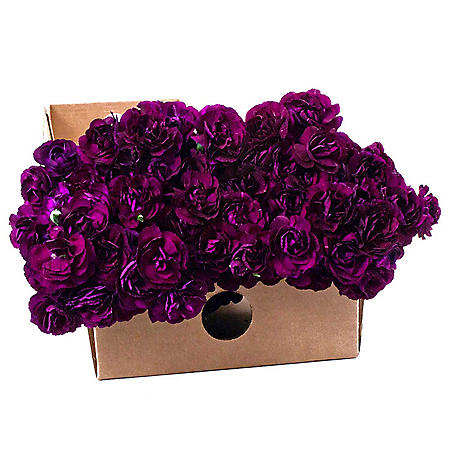 Florigene Mini Carnations, Moonvelvet (200 stems)