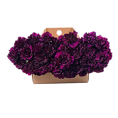 Florigene Carnations, Moonvista (140 stems)
