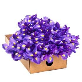 Iris, Purple (100 stems)