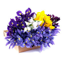 Iris, Assorted Colors (100 stems)