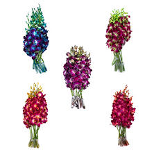 Orchids, Assorted Tinted Colors (70 stems)