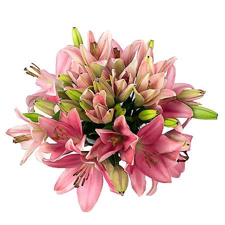 LA Lilies, Pink (50 stems)