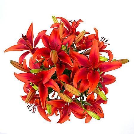 LA Lilies, Red (50 stems)