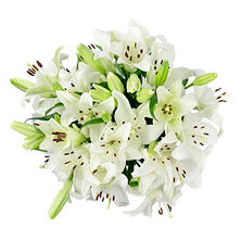 Asiatic Lilies-White (100 Stems)