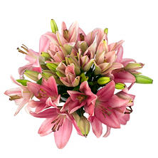 Asiatic Lilies, Pink (100 stems)