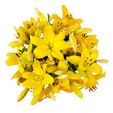 Asiatic Lilies, Yellow (100 stems)