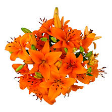 Asiatic Lilies, Orange (100 stems)