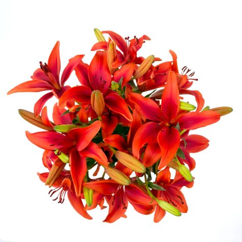 Asiatic Lilies-Red (100 Stems)