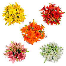 Asiatic Lilies, Assorted Colors (100 stems)