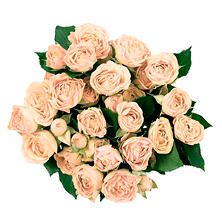 Spray Roses, Peach (120 stems)