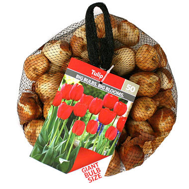 Tulip Mix - Bag of 100 Bulbs