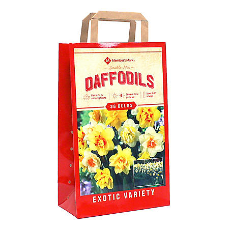 Daffodil Double Mix - Package of 40 Dormant Bulbs
