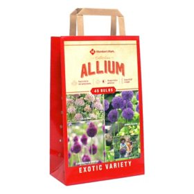 Allium Collection - Package of 45 Dormant Bulbs