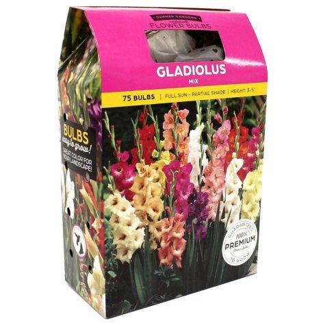 Gladiolus Mix Bulbs