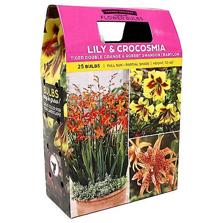 Tiger Double Orange, Robert Swanson and Montbretia Babylon Lillies - 30 Dormant Bulbs