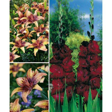 Lilium/Gladiolus, 45 Dormant Bulbs