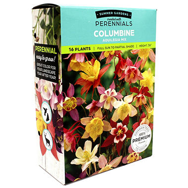 Columbine Aquilegia Mixed