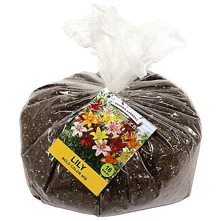 Bold Color Mixed Lilies - 20 Dormant Bulbs