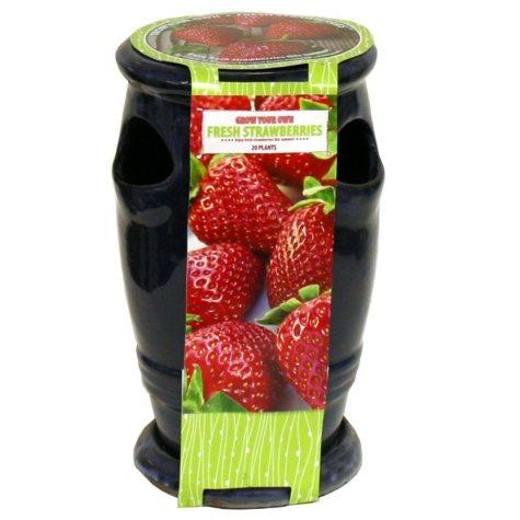Strawberry/Herb Planter