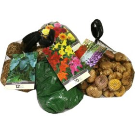 Assorted Bagged Spring Bulbs