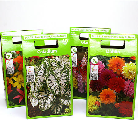 Assorted Boxed Spring Bulbs