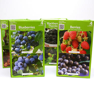 Assorted Fruit & Berry Plants - 4 ct.