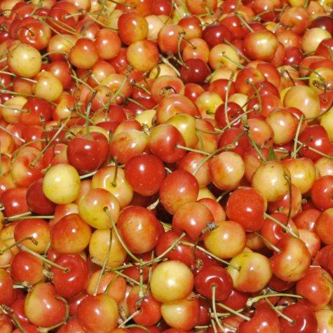 Bing Cherries DI (1lb.)