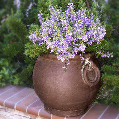 Tecate Clay Pottery Ring Planter - Cafe