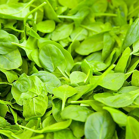 Baby Leaf Spinach - 1 lb.