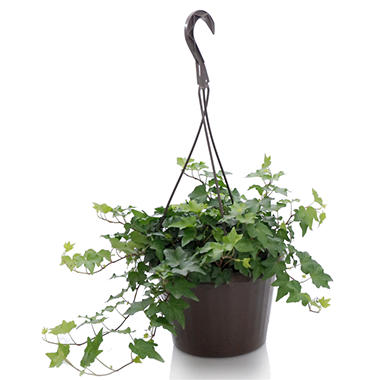 Foliage Hanging Basket