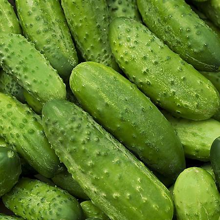 Mini Cucumbers - 2 lb.