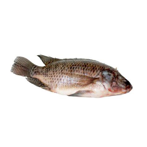 Sea Best Whole Tilapia (6 lbs.)
