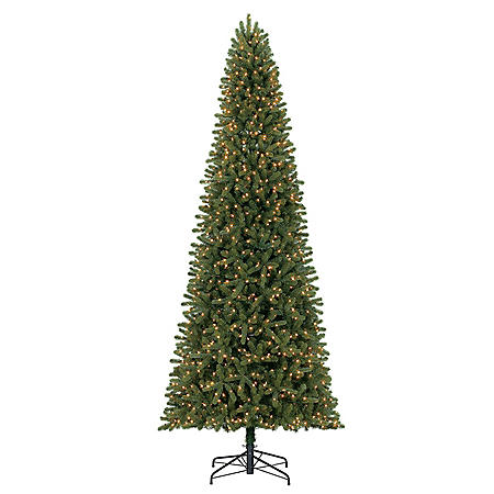 Member's Mark 12' Ellsworth Fir Christmas Tree